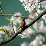 ヴィヴァルディ「春」ピアノ演奏の難易度&オススメ練習方法